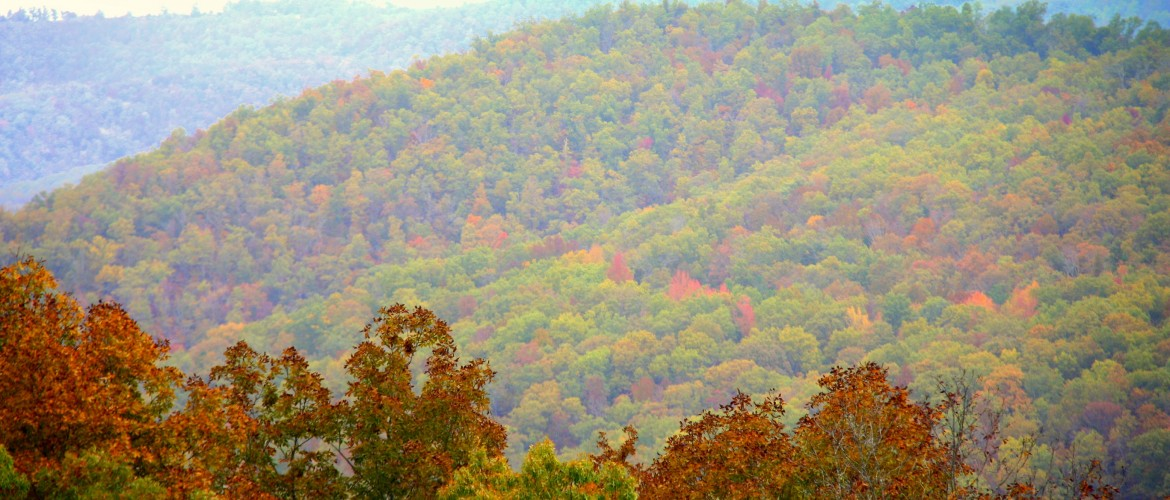 """Peak"" fall colors!!! the peak of color occurs around two or three weeks after color changes begin."