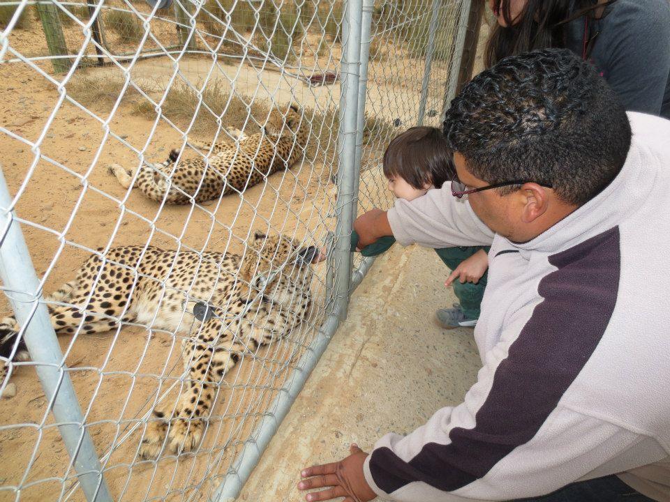My boy petting a cheetah.