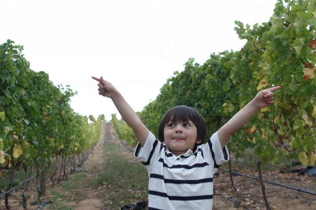 Who says kids can't visit vineyards? :) This is one of the many things you can do around Cape Town.