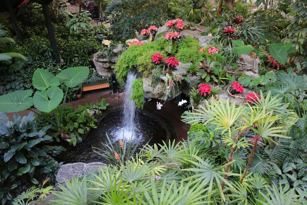 Tropical plants in abundance... WOW!!!