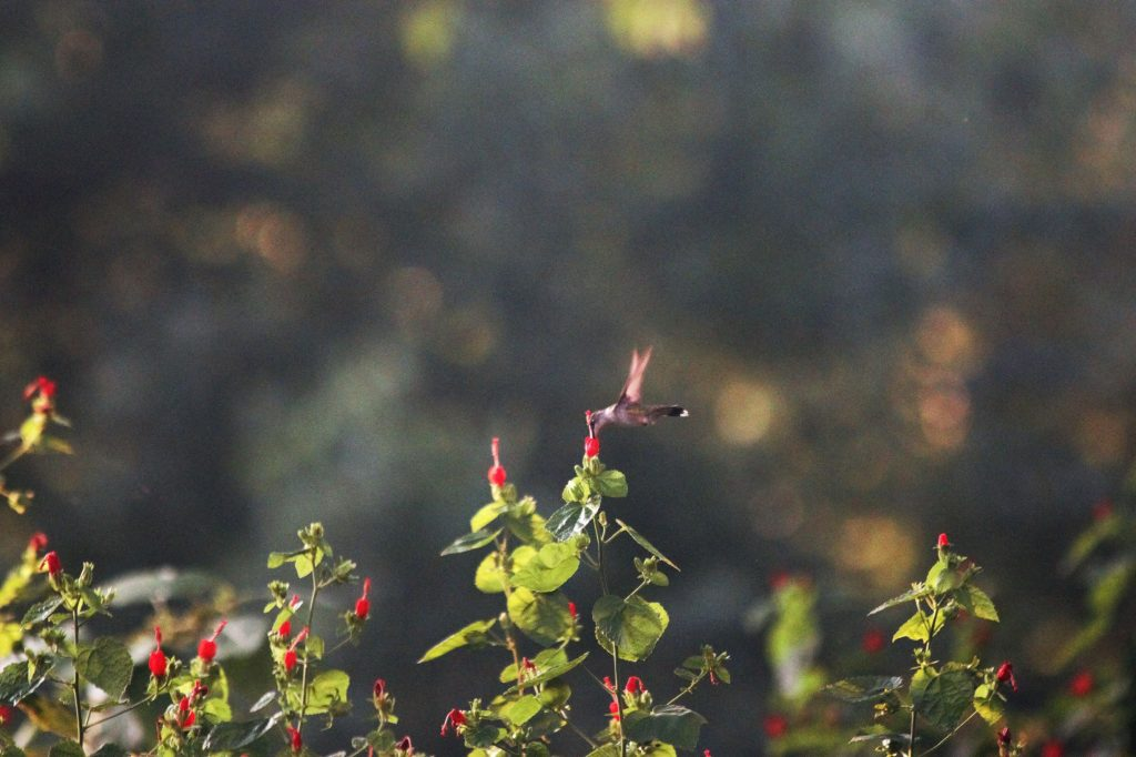 So many hummingbirds ad in act they have a hummingbird garden.